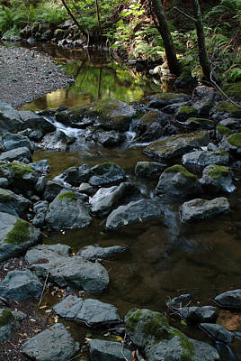 Redwood Creek Art Print