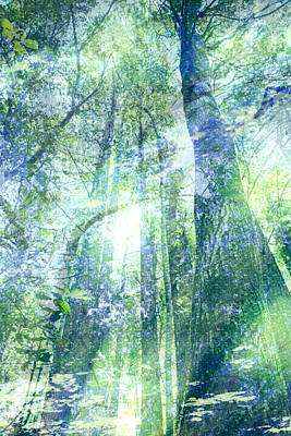 Redwood Dreams Art Print by Nicole Swanger