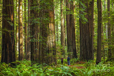 Sequoia Photograph - Redwood Forest by Diane Diederich