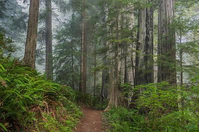 Photograph - Redwood Garden by Greg Nyquist