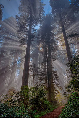 Photograph - Redwood Glory 2013 by Ralph Nordstrom