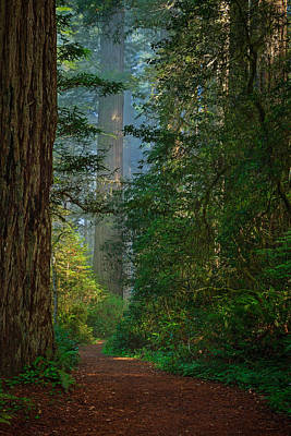 Photograph - Redwood Grove 2013 by Ralph Nordstrom
