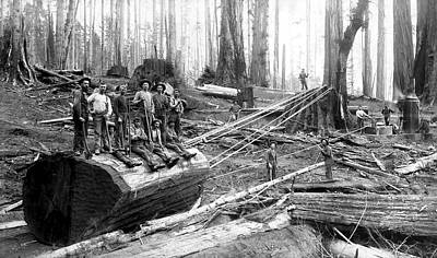 Old Shovels Photograph - Redwood Logging Crew C. 1890 by Daniel Hagerman