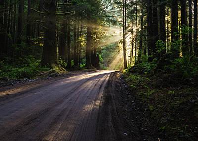 Redwood Magic Original by Vishwanath Bhat