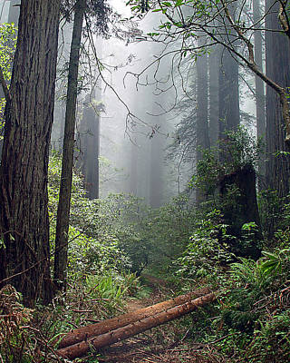 Photograph - Redwood Mist by John Bushnell