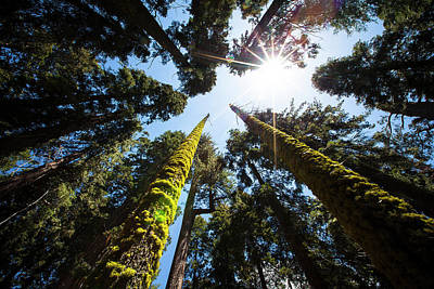 Redwood National Park Photograph - Redwood National Park, California by Janet Muir