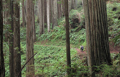 Photograph - Redwood National Park by Michael Kauffmann