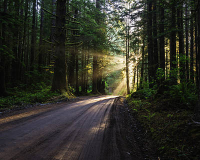 Photograph - Redwood National Park Morning by Vishwanath Bhat