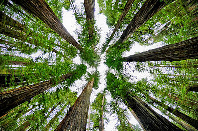 Photograph - Redwood Skies by Kevin Munro