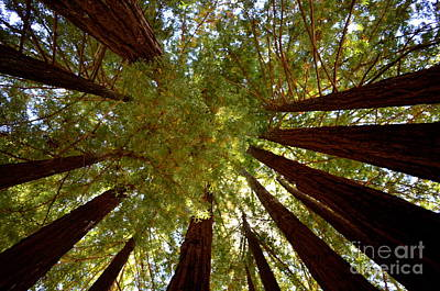Photograph - Redwood Sky  by Johanne Peale