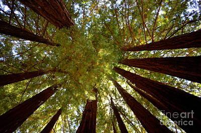 Photograph - Redwood Sky  by Johanne Peale