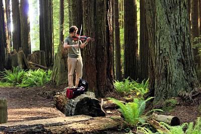 Redwood Symphony   Art Print