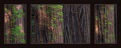 Redwood Texture Triptych Art Print by Leland D Howard
