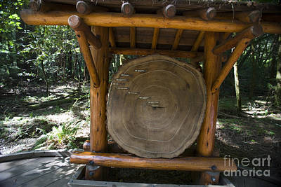 Design Pics - Redwood Tree Cross Section Display Muir Woods National Monument by Jason O Watson