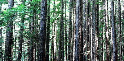 Redwoods 2 Art Print by Greg Thiemeyer