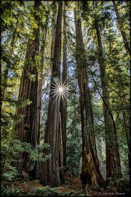 Photograph - Redwoods by Erika Fawcett