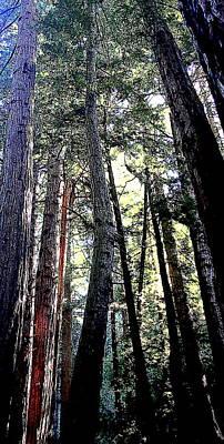 Redwoods Art Print by Greg Thiemeyer