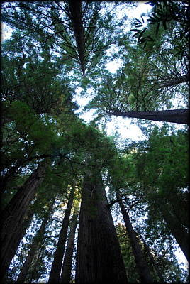 Photograph - Redwoods II by Kathy Sampson