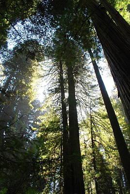 Photograph - Redwoods IIII by Kathy Sampson
