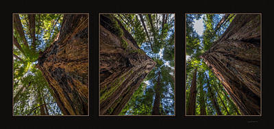 Photograph - Redwoods Triptych by Leland D Howard