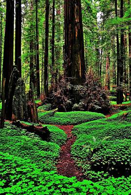 Redwoods Wonderland Art Print