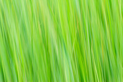 Absract Photograph - Reed Abstract by Bryan Bzdula