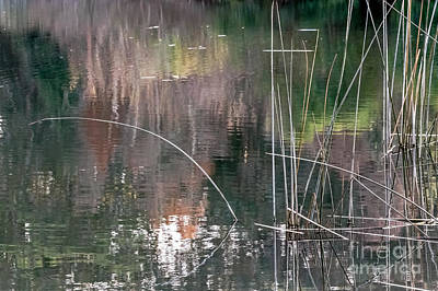 Photograph - Reed Abstract by Kate Brown