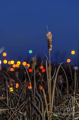 Flower Photograph - Reed At Twilight by Viktor Birkus