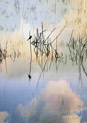 Photograph - Reed Bird And Clouds by Sharon Foster