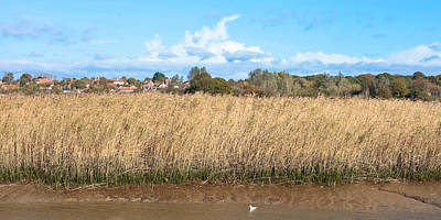 Swampland Photograph - Reed Marsh by Tom Gowanlock