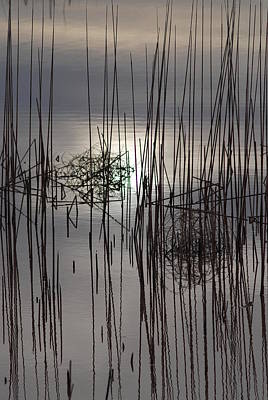 Photograph - Reed Reflection 3 by T C Brown