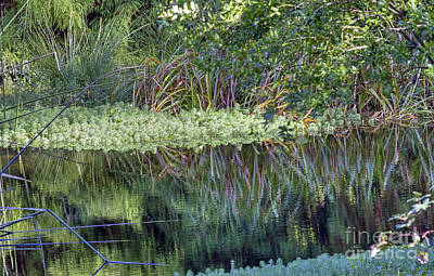 Art Print featuring the photograph Reed Reflections by Kate Brown