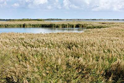 Reedbeds And Lagoons Art Print by Bob Gibbons