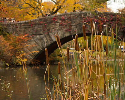 Art Print featuring the photograph Reeds And Gapstow Bridge by Jose Oquendo