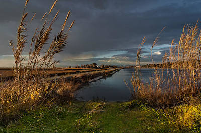 Photograph - Reeds And Pools. Valencia by Juan Carlos Ferro Duque
