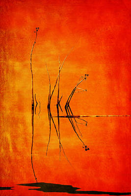Photograph - Reeds And Reflection In Orange by Nikolyn McDonald