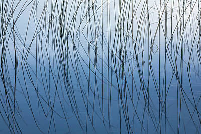 Northwoods Photograph - Reeds And Reflection Thornton Lake by Adam Jones