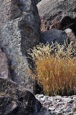 Photograph - Reeds And Rock  by Eric Rundle