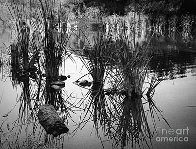 Reeds Art Print by Arne Hansen