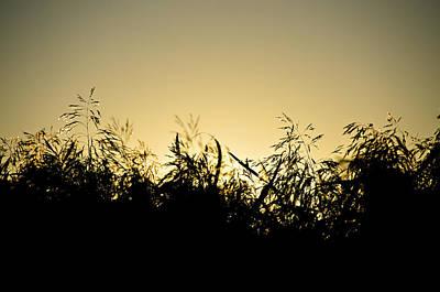 Photograph - Reeds by Henrik Petersen