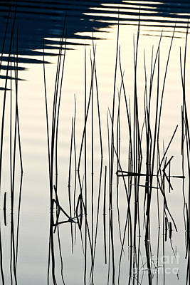 Photograph - Reeds II by Stuart Gordon