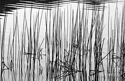 Photograph - Reeds IIi by Stuart Gordon