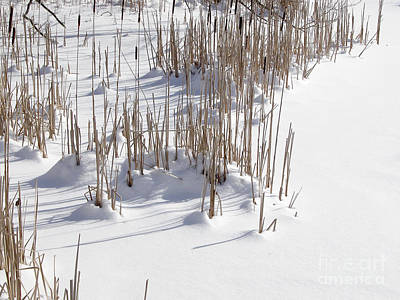 Photograph - Reeds In Snow 2 by Tom Brickhouse
