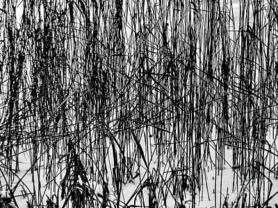 Photograph - Reeds In Snow by Michael Canning