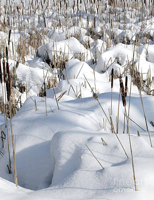 Photograph - Reeds In Snow by Tom Brickhouse