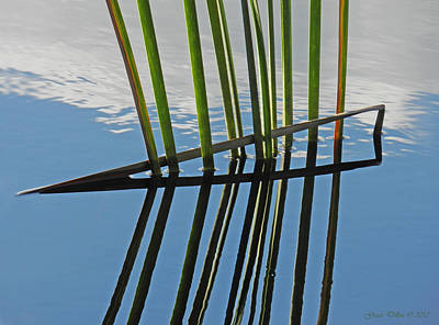 Photograph - Reeds In Wetlands by Grace Dillon
