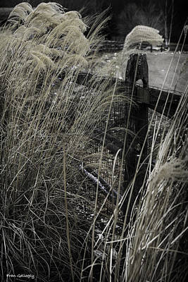 Photograph - Reeds In Winter by Fran Gallogly