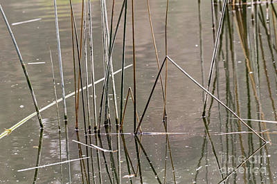 Photograph - Reeds by Kate Brown