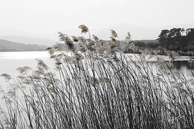 Photograph - Reeds by Kume Bryant