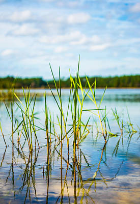 Photograph - Reeds On The Lake by Parker Cunningham